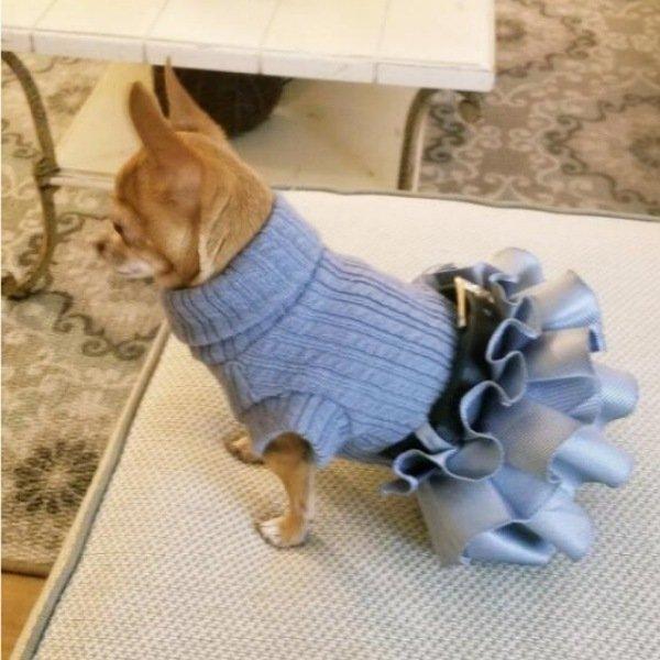 画像1: 【DOG WEAR】ベルト付きニット×三段フリルデザイン<送料無料> (1)