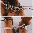 画像2: 【DOG WEAR】クマさんデザインチェック柄の首輪・リードセット<送料無料> (2)